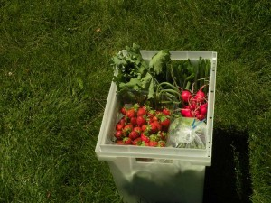 CSA Share in June